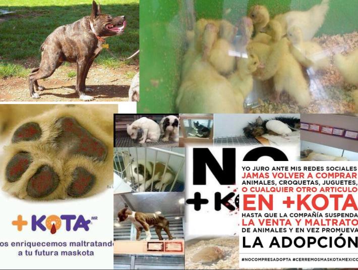 Los tuiteros y el maltrato animal